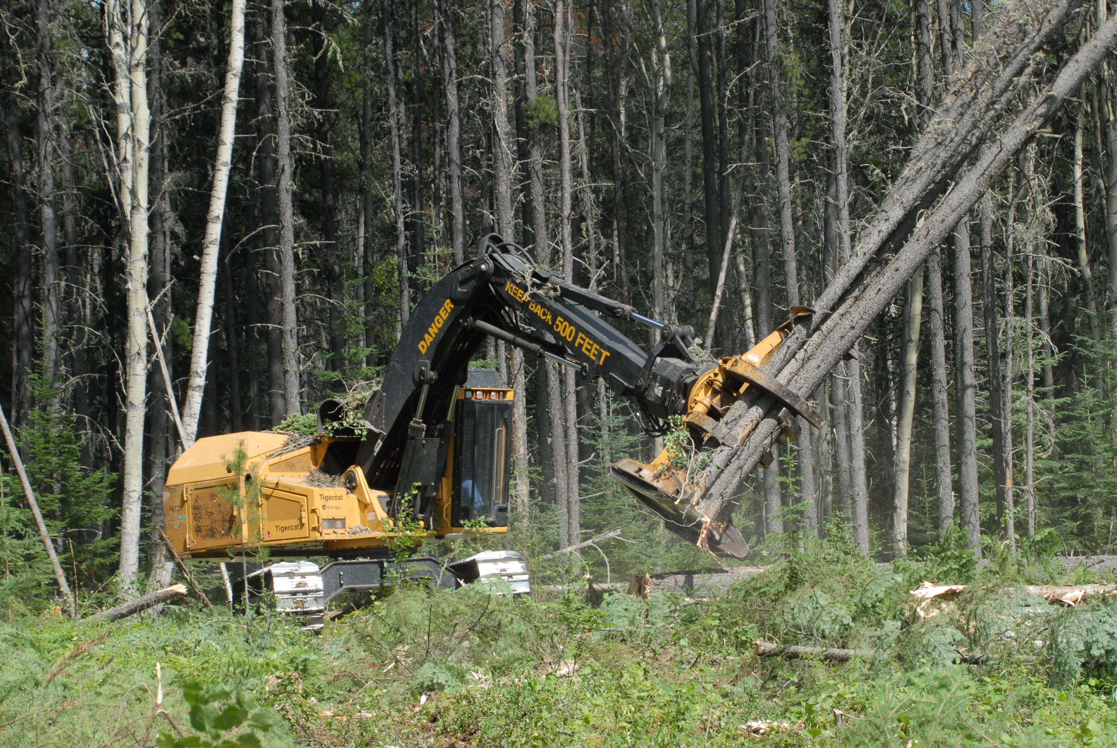кланов скинов работа по вырубке леса вакансии овчины Республика